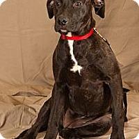 Adopt A Pet :: Hera - Crescent, OK