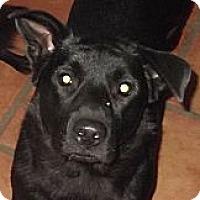 Adopt A Pet :: Debbie Reynolds - Key Biscayne, FL
