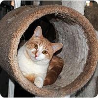 Adopt A Pet :: Mac - Palmdale, CA