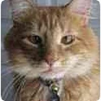 Adopt A Pet :: Alex - Arlington, VA