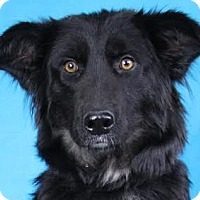 Adopt A Pet :: Janey - Minneapolis, MN