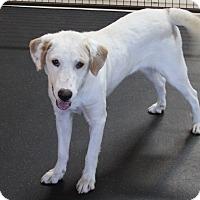 Adopt A Pet :: Mickey - Rockwall, TX