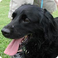 Adopt A Pet :: Bo - Erwin, TN