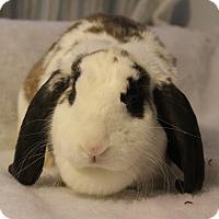 Adopt A Pet :: Winnie - Hillside, NJ
