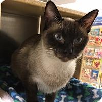 Adopt A Pet :: Keema - Manchester, CT