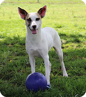 Terrier (Unknown Type, Medium) Mix Dog for adoption in Savannah, Tennessee - Dot