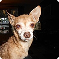 Adopt A Pet :: Suzi the Meerkat - Poulsob, WA