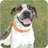 Adopt A Pet :: Bailey - Phoenix, AZ