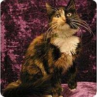 Adopt A Pet :: Cali - Sacramento, CA