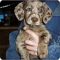 Adopt A Pet :: Bristol - Adamsville, TN