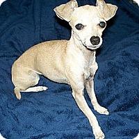 Adopt A Pet :: MANDY - AUSTIN, TX