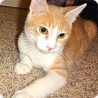 Adopt A Pet :: Mason - Escondido, CA