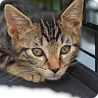 Adopt A Pet :: Billy - Brooklyn, NY