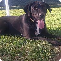 Adopt A Pet :: TUCKER - New Windsor, NY