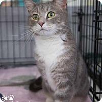 Adopt A Pet :: Boogaloo - Merrifield, VA