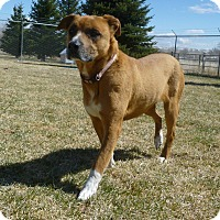 Adopt A Pet :: Lucy - Buffalo, WY