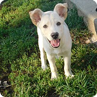 Adopt A Pet :: love - mooresville, IN