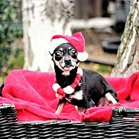 Adopt A Pet :: Ela - Sacramento, CA