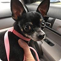 Adopt A Pet :: Rico Suave - Gainesville, FL