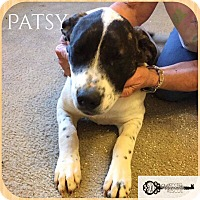 Adopt A Pet :: Patsy - DeForest, WI
