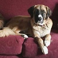 Adopt A Pet :: Chloe - Glendale, AZ