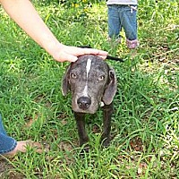 Adopt A Pet :: Briggs - East Hartford, CT