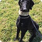 Adopt A Pet :: Sir Duke