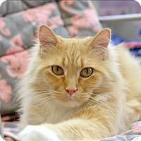 Adopt A Pet :: Mateo - Delaware, OH