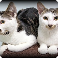 Adopt A Pet :: Petey and Spanky - Montclair, NJ