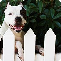 Adopt A Pet :: Scarlet - Stockton, CA