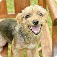 Adopt A Pet :: Monica - San Antonio, TX