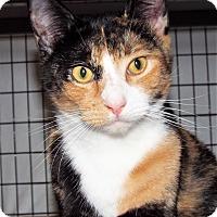 Adopt A Pet :: Honeydew - Grants Pass, OR