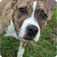 Adopt A Pet :: Athena - Justin, TX