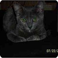 Adopt A Pet :: Luna - Arlington, VA