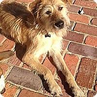 Adopt A Pet :: Snooki - Somers, CT