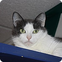 Adopt A Pet :: Demi (LE) - Little Falls, NJ