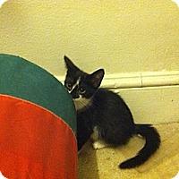 Adopt A Pet :: Bridgett - Cranford/Rartian, NJ
