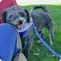 Adopt A Pet :: Smokey great best buddy - Sacramento, CA