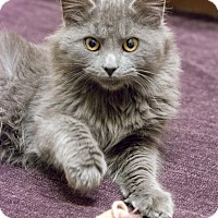 Adopt A Pet :: Wooly - Chicago, IL