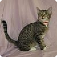 Adopt A Pet :: Wallace - Powell, OH