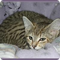 Adopt A Pet :: Dani - New Richmond,, WI