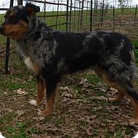 Adopt A Pet :: Kyah - Bedminster, NJ