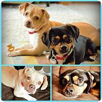 Adopt A Pet :: Calix - DeForest, WI
