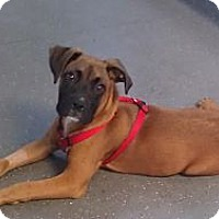 Adopt A Pet :: Bruno - Santa Monica, CA