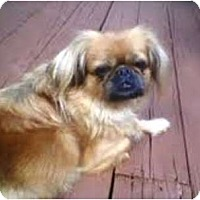 Adopt A Pet :: Tessa - Duluth, GA