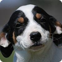 Adopt A Pet :: Caroline - Providence, RI