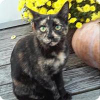 Adopt A Pet :: Fallon - Colmar, PA