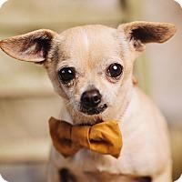 Adopt A Pet :: Greg - Portland, OR