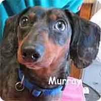 Adopt A Pet :: Murray - Warren, PA