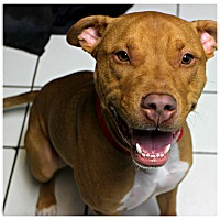 Adopt A Pet :: Simba - Forked River, NJ